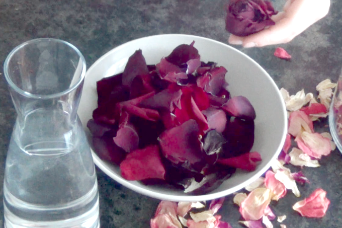 getting rose petals ready for making rose water