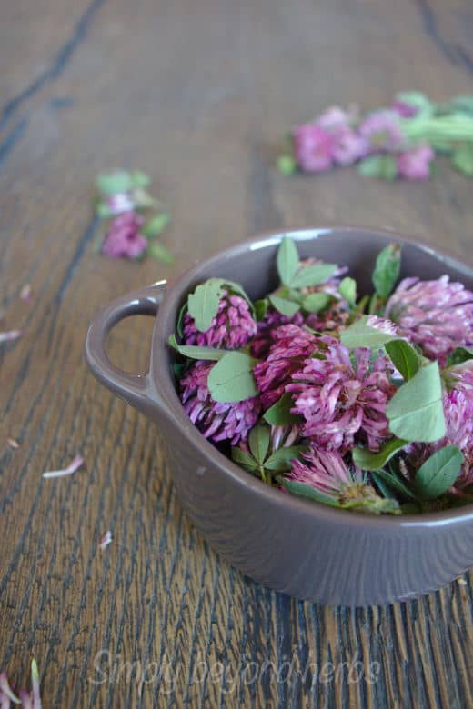 red clover in a bowl