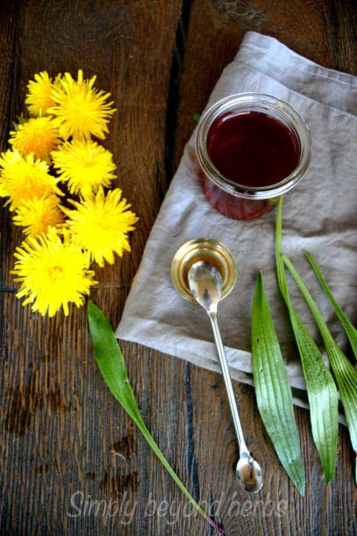 Homemade Cough syrup with dandelion and ribwort plantain