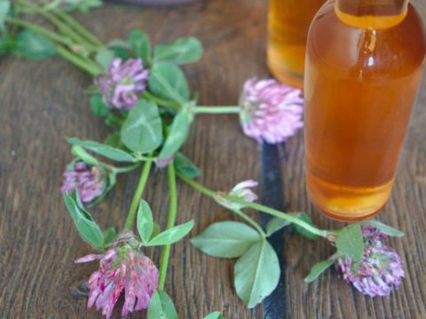 Red Clover Vinegar - Natural Remedy for menopause