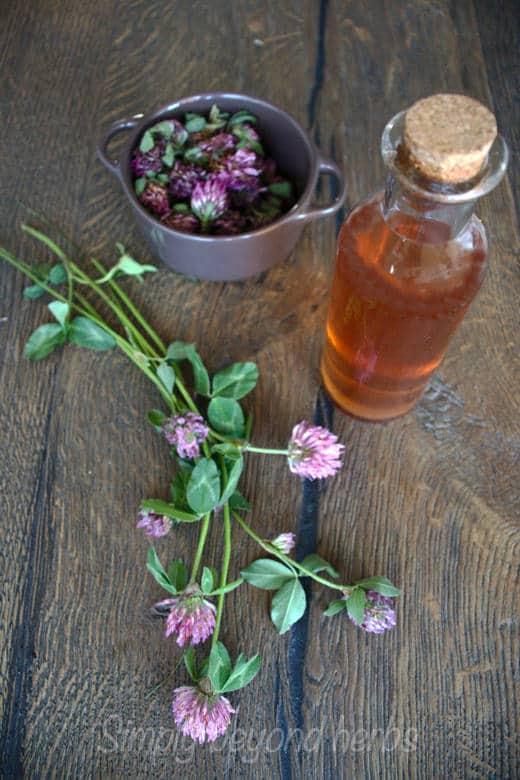 medicinal vinegar made of red clover and apple cider vinegar