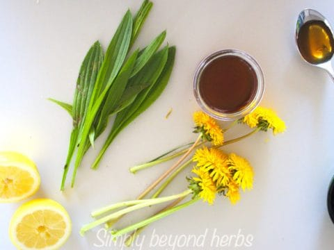 Herbal cough syrup with ribwort plantain & dandelion