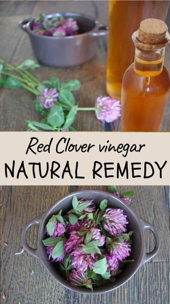 This homemade Red Clover medicinal vinegar is a powerful natural remedy that eases the most common menopause symptoms such as hot flashes, night sweats, and mood swings. It also reduces the risk of developing osteoporosis and cardiovascular diseases.