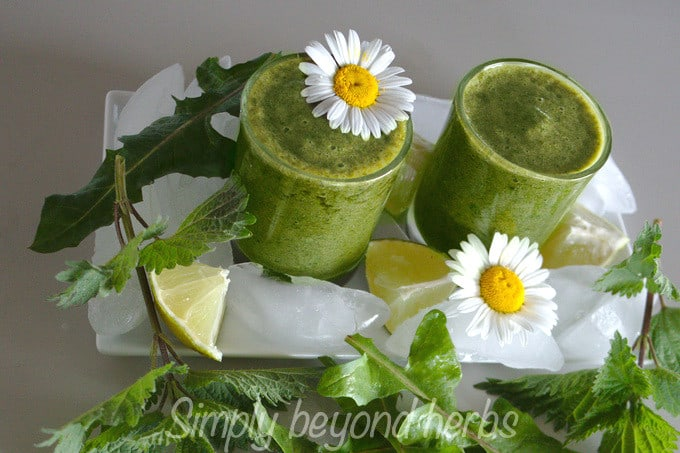 smoothie made of dandelion and nettle leaves