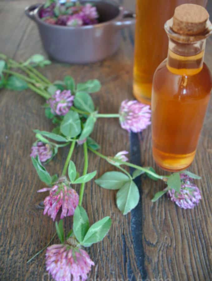 red clover vinegar
