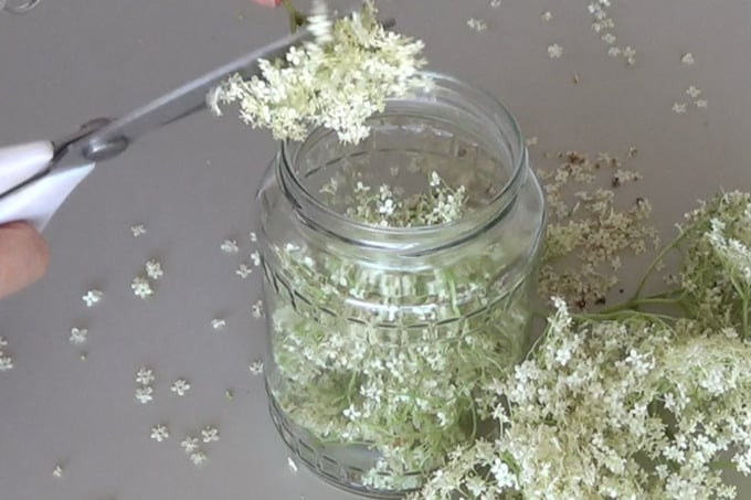 Preparing Elderflower blossoms for infusion