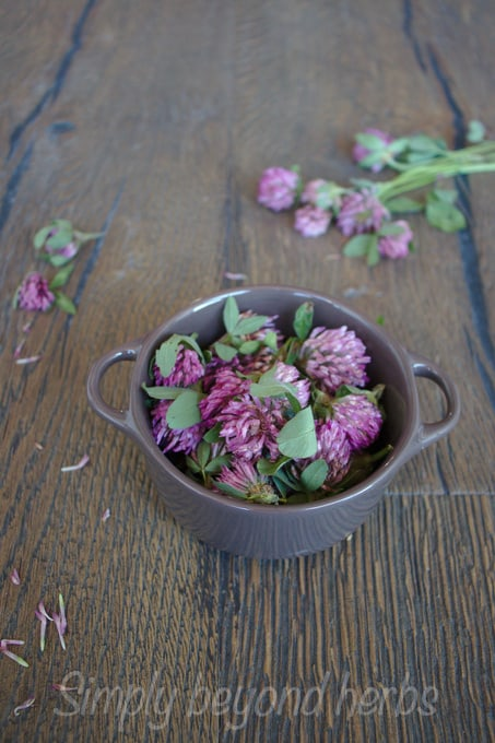 purple blossoms of red clover in a casserole