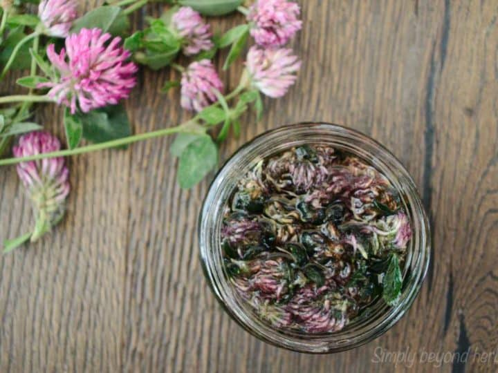How to make and use red clover oil
