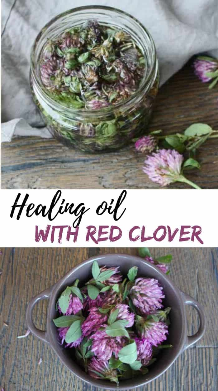purple blossoms of the red clover make an outstanding nourishing oil that, by increasing collagen production, improves the elasticity of your skin and reduces wrinkles. Its anti-inflammatory properties can also help with eczema or psoriasis.
