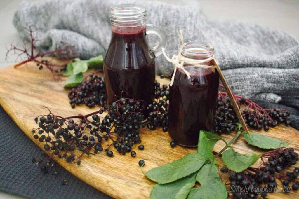 Elderberry syrup a potent cold and flu natural remedy