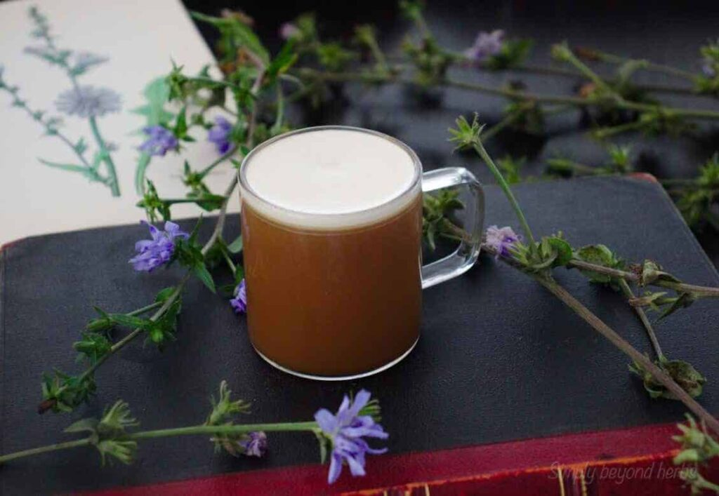 Chicory coffee with chicory flowers and herbarium