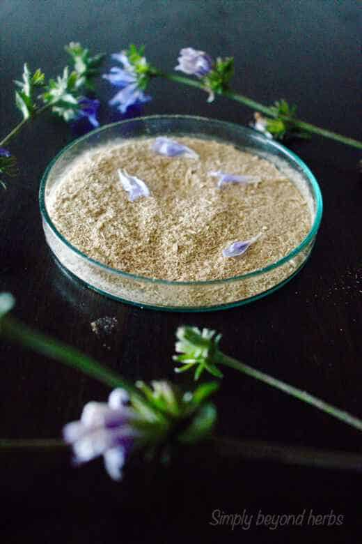 fine powder made of roasted and ground chicory roots