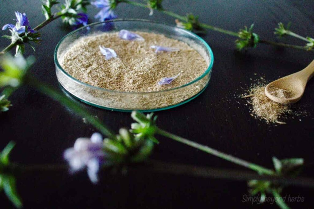 fine powder made of roasted chicory root, ready to make chicory coffee