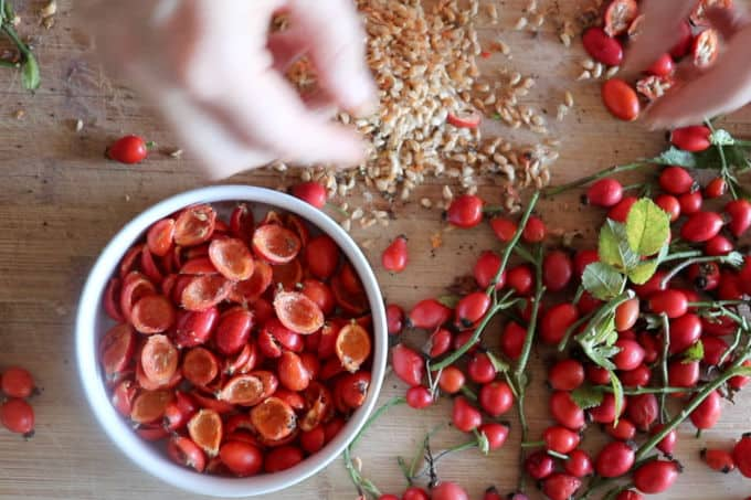 Removing seeds from the fruits of rosehips
