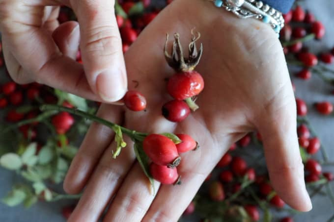 showing various types of rosehips - all are edible
