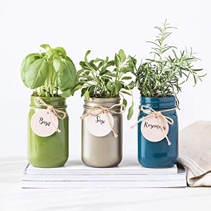 Herb garden in the jars