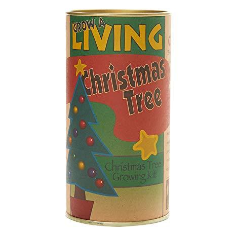 Living Christmas Tree | Seed Grow Kit
