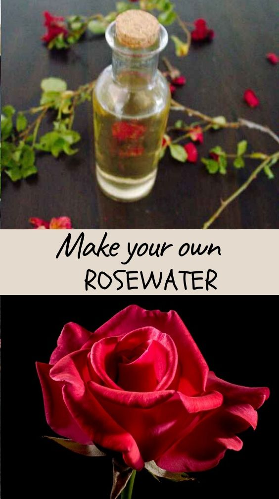 This easy to make rosewater recipe is a smart way to enhance your skin, hair or even eyes. Delicately scented rose water hydrosol is a pure botanical extract made of condensed water captured after steam distillation.