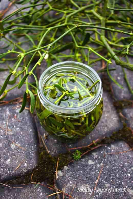 Mistletoe tincture how to make